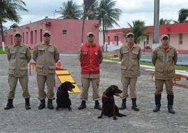 corpo de bombeiros adquire equipamentos para caes (9)