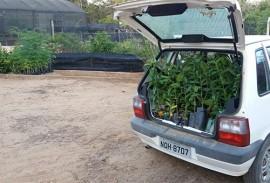 emater comeca visitas para implantar quintais produtivos 4 270x183 - Emater começa visitas para implantar quintais produtivos em 16 municípios na região de Patos
