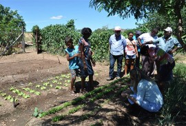 emater comeca visitas para implantar quintais produtivos 6 270x183 - Emater começa visitas para implantar quintais produtivos em 16 municípios na região de Patos