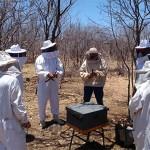 emepa e emater implantam apiarios no ecoprodutivo (1)