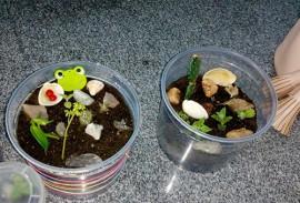 socioeducando aprendem a cultivar plantas em pequenos depositos 3 270x183 - Socioeducandos aprendem a cultivar plantas em pequenos terrários