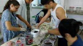 socioeducando aprendem a cultivar plantas em pequenos depositos 4 270x152 - Socioeducandos aprendem a cultivar plantas em pequenos terrários