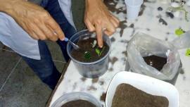 socioeducando aprendem a cultivar plantas em pequenos depositos 6 270x152 - Socioeducandos aprendem a cultivar plantas em pequenos terrários