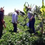 agricultores de Nazarezinho (1)