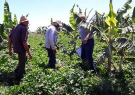 agricultores de Nazarezinho 1 270x191 - Jovem agricultor de Nazarezinho recebe apoio da Emater e compra imóvel rural com a produção de hortaliças