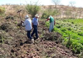 agricultores de Nazarezinho 2 270x191 - Jovem agricultor de Nazarezinho recebe apoio da Emater e compra imóvel rural com a produção de hortaliças