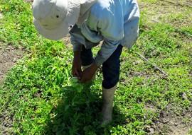 agricultores de Nazarezinho 5 270x191 - Jovem agricultor de Nazarezinho recebe apoio da Emater e compra imóvel rural com a produção de hortaliças