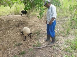 caprinos bomfim2 270x202 - Projeto Ecoprodutivo: Nascem novos ovinos Dorpe no Quilombolas do Bonfim