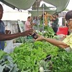 feira de agricultura familiar na saude foto RicardoPuppe (2)