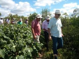 algodão 1 270x202 - Governo da Paraíba retoma ações de cooperação com o Mercosul em extensão rural