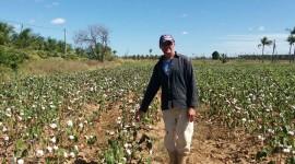 algodão 3 270x150 - Governo da Paraíba retoma ações de cooperação com o Mercosul em extensão rural