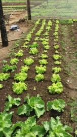 malta-hortaliça agroecologica (1)