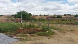 malta-hortaliça agroecologica (3)