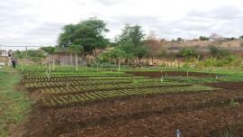 malta-hortaliça agroecologica (5)