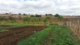 malta-hortaliça agroecologica (6)