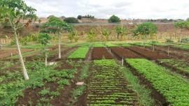 malta hortaliça agroecologica 7 270x152 - Família melhora qualidade de vida produzindo hortaliças em um hectare de terra