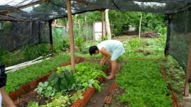 2 05 03 2018 270x151 - Mês da Mulher: Emater promove eventos em homenagem às agricultoras familiares