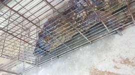 IMG 20180310 WA0003 270x151 - Corpo de Bombeiros participa de instrução técnica de captura e manejo de animais silvestres
