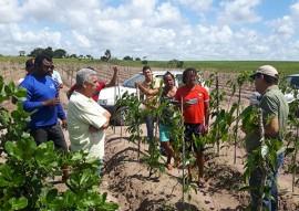 emater incentiva producao de inhame agroecologico em areas indigenas 3 270x191 - Governo incentiva produção de inhame agroecológico em áreas indígenas da Paraíba