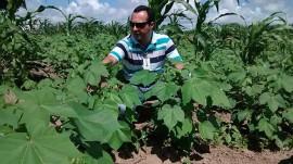 Alexandre Alfredo Algodão 270x151 - Projeto Algodão Paraíba é tema de palestra no Congresso Brasileiro de Nutrição em Brasília