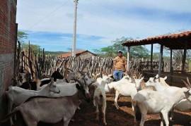 cariri3 270x179 - Criação de caprinos garante renda para famílias do Cariri paraibano