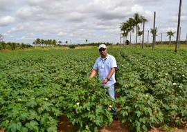 emater metodologia de ATER projeto algodao paraiba na bolivia (9)