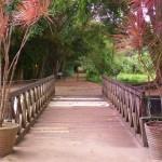 Jardim Botânico 2 - foto Marcela Lopes