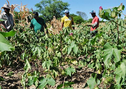 trinta anos depois agricultor volta a cultivar agroecologico (2)