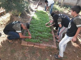 Escola Estadual de Ensino Fundamental Calula Leite Conceição 13 270x202 - Hortas enriquecem aprendizado e promovem alimentação saudável nas escolas estaduais da Paraíba