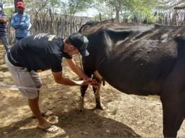 04 270x202 - Criadores do Cariri participam de cursos sobre sanidade animal e controle do leite